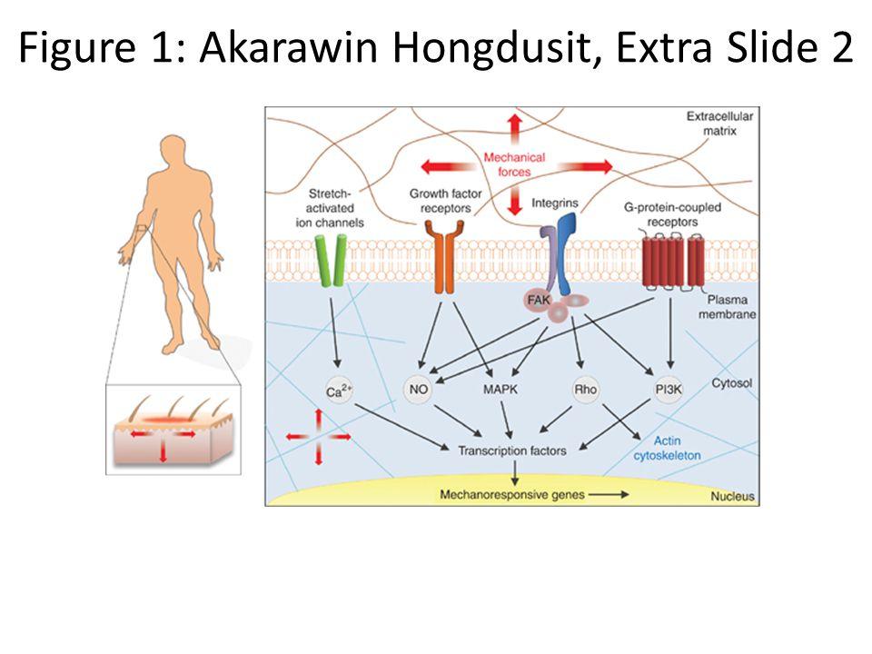 Figure 1: Akarawin Hongdusit, Extra Slide 2
