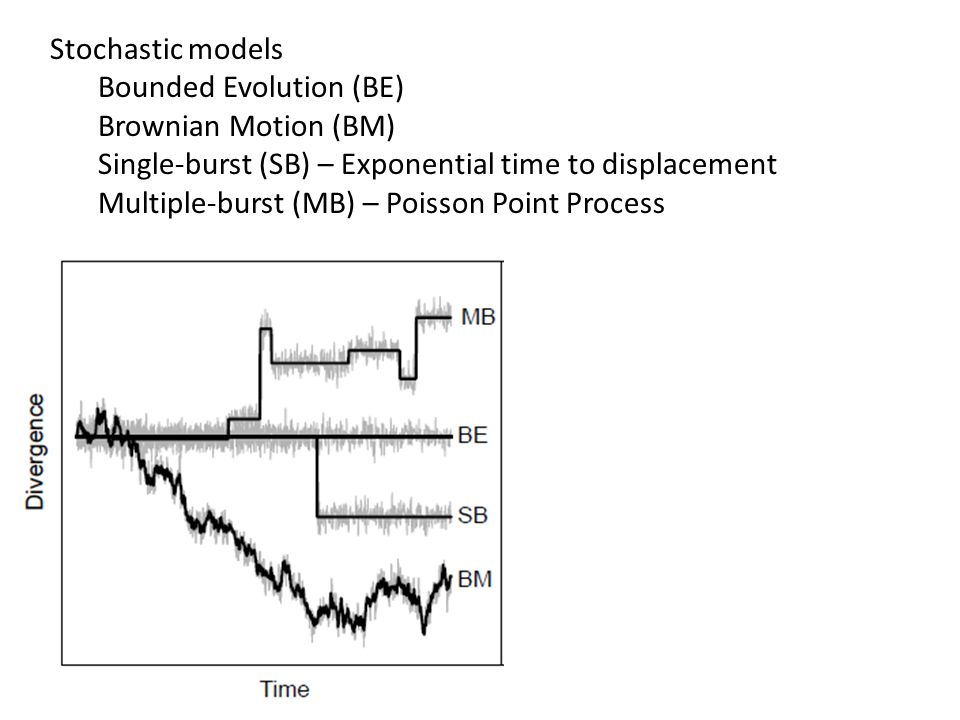 Stochastic models Bounded Evolution (BE) Brownian Motion (BM) Single-burst (SB) – Exponential time to displacement.