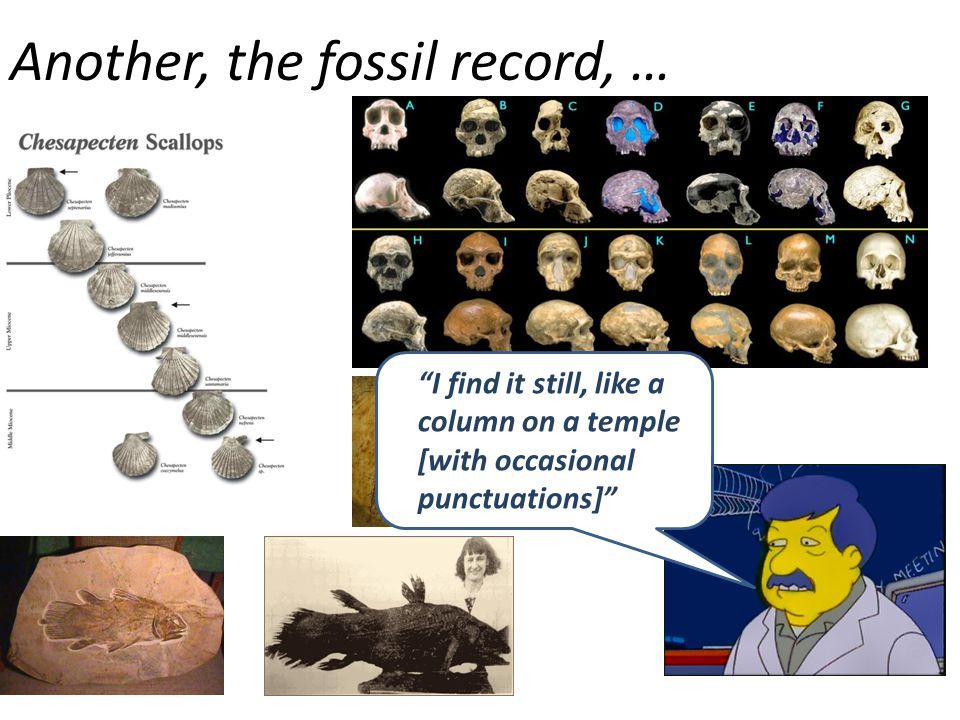 Another, the fossil record, …
