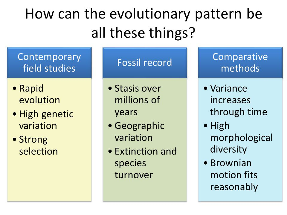 How can the evolutionary pattern be all these things
