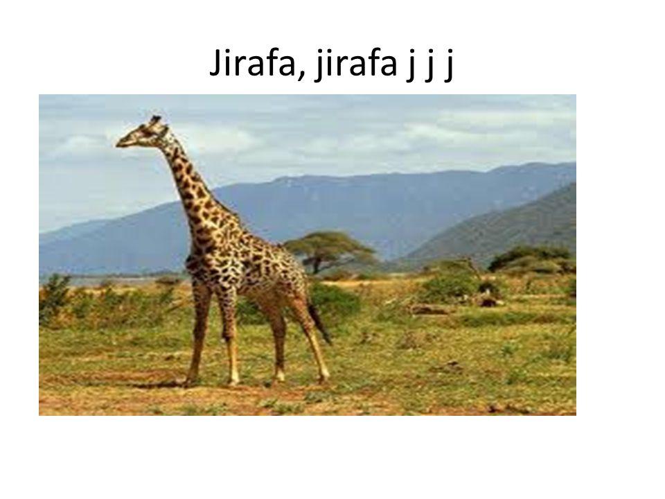 Jirafa, jirafa j j j