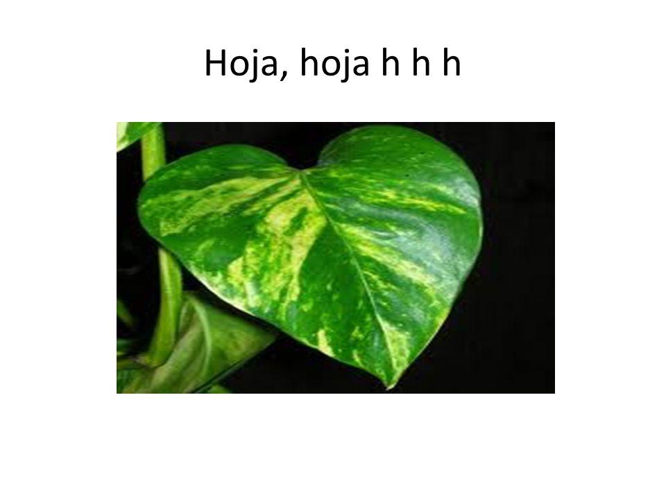Hoja, hoja h h h