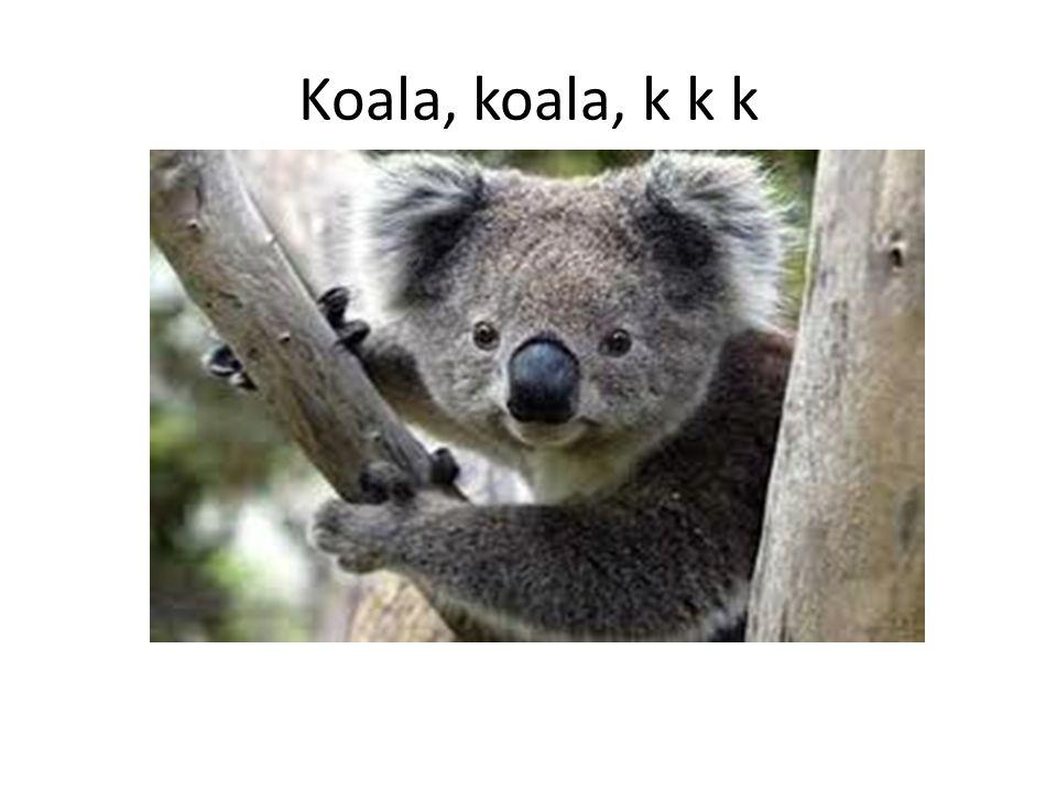Koala, koala, k k k