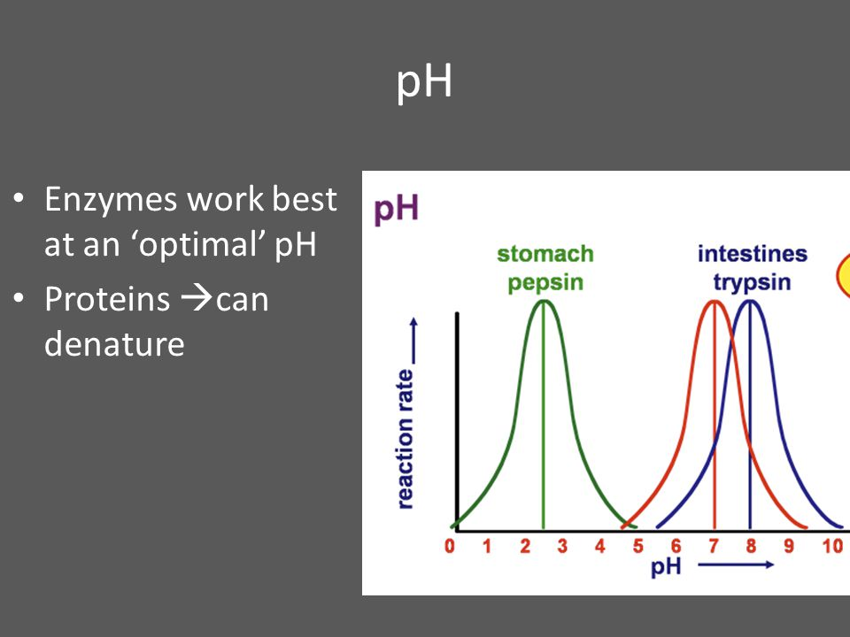 pH Enzymes work best at an 'optimal' pH Proteins can denature