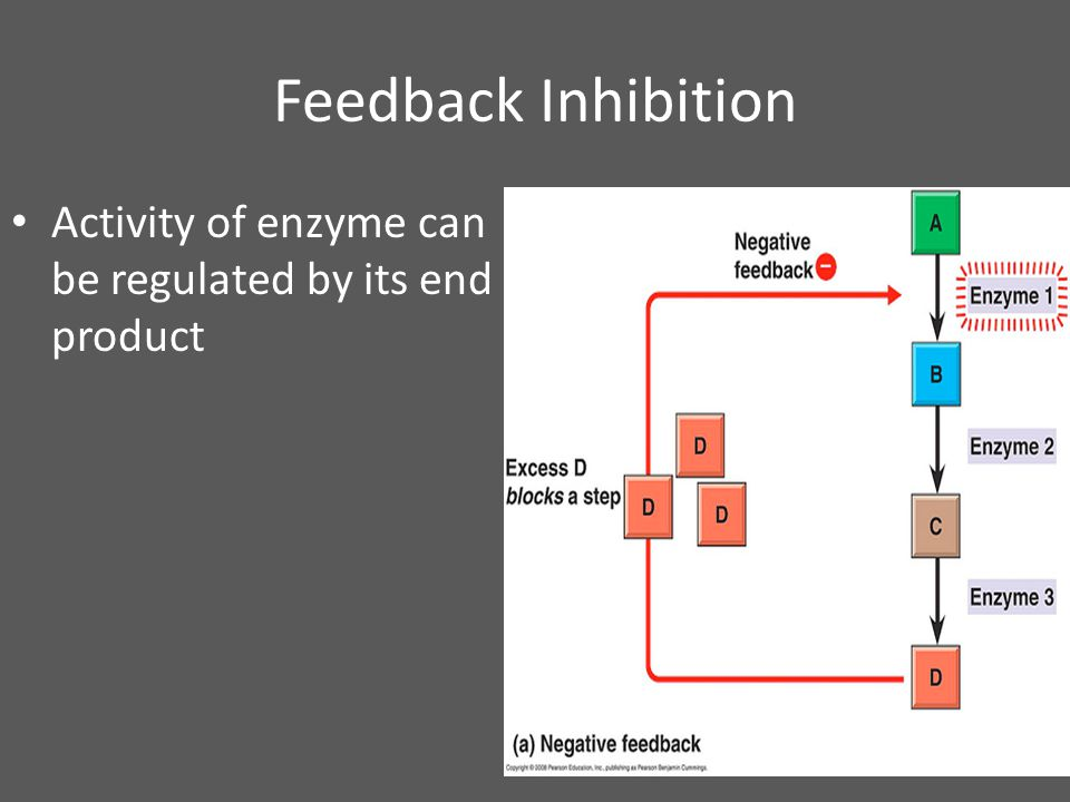 Feedback Inhibition Activity of enzyme can be regulated by its end product SKIP!!!