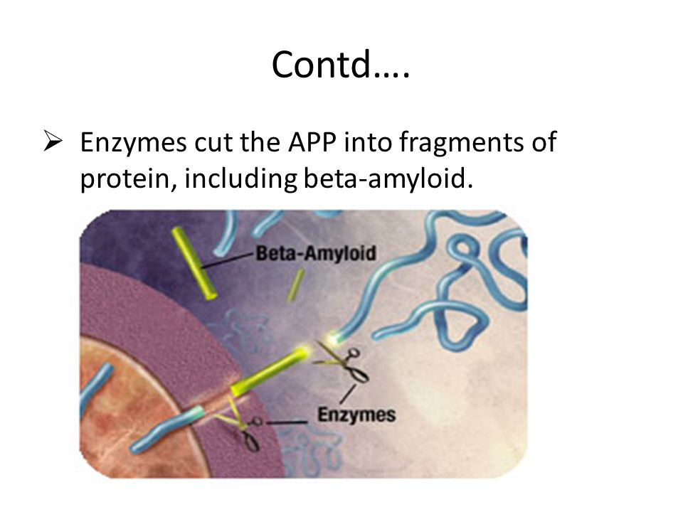 Contd…. Enzymes cut the APP into fragments of protein, including beta-amyloid.