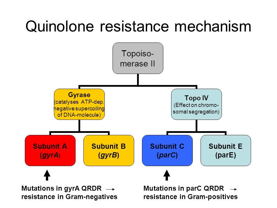 Quinolone resistance mechanism