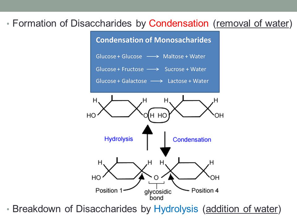 Formation of Disaccharides by Condensation (removal of water)