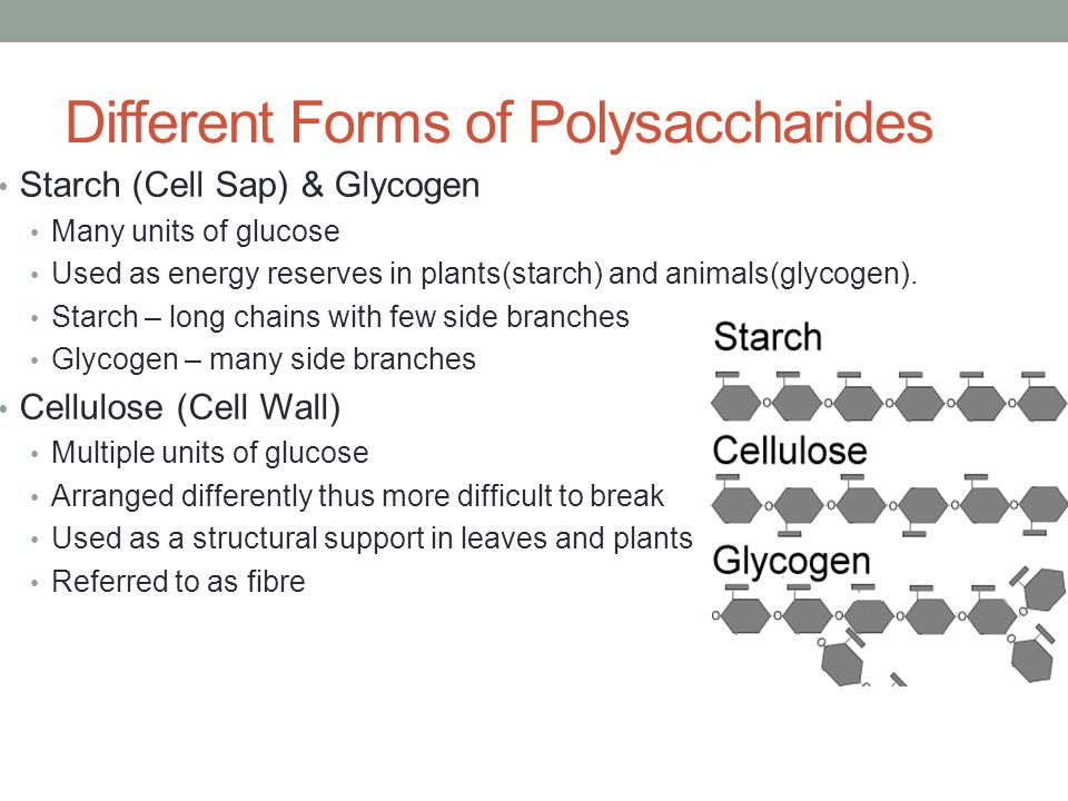 Different Forms of Polysaccharides