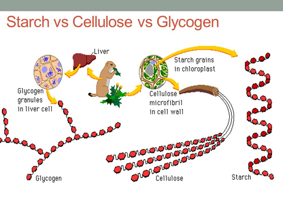 Starch vs Cellulose vs Glycogen