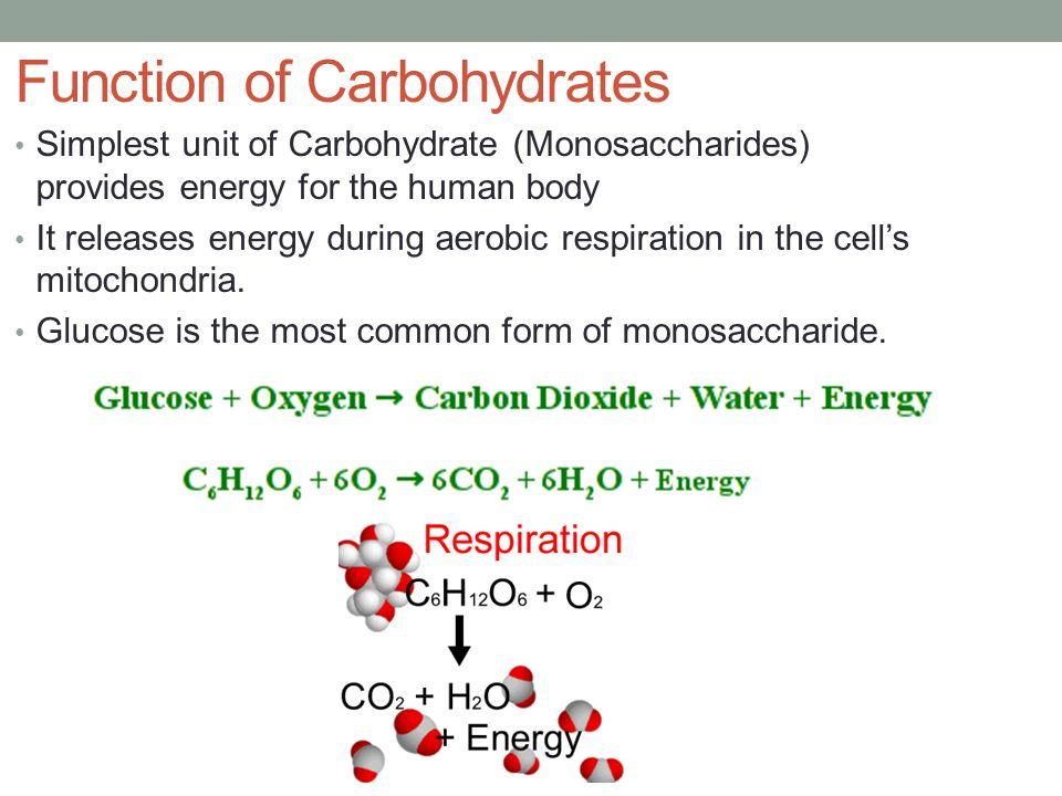 Function of Carbohydrates