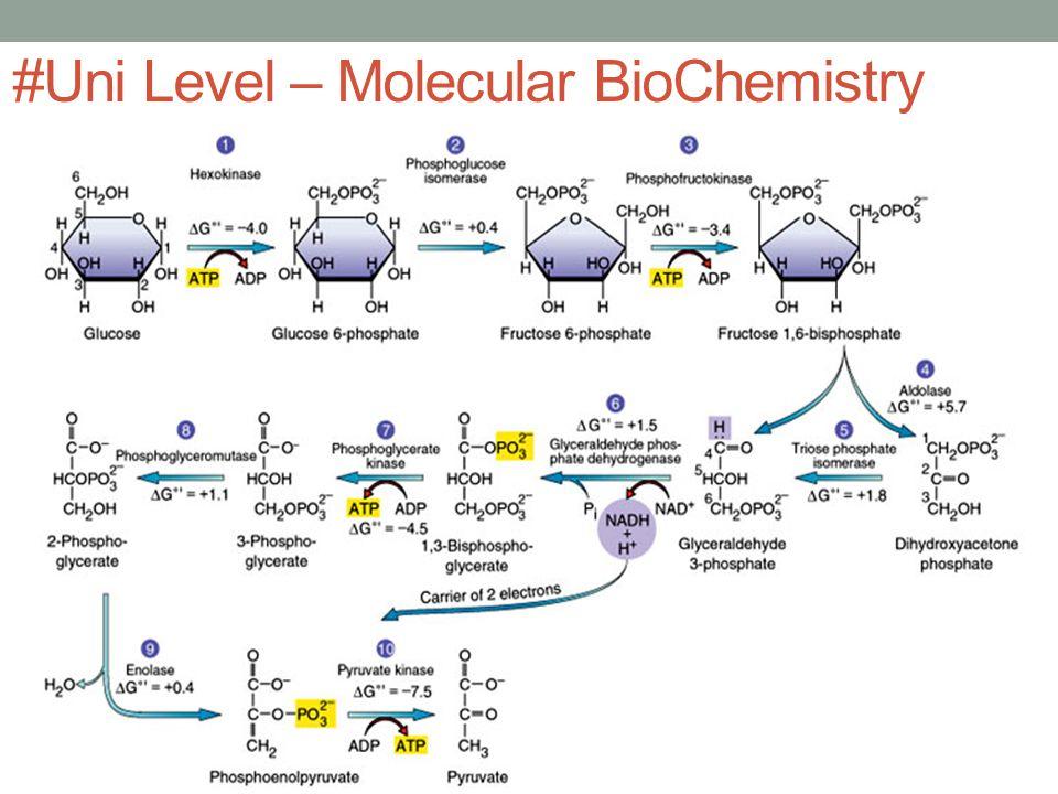 #Uni Level – Molecular BioChemistry