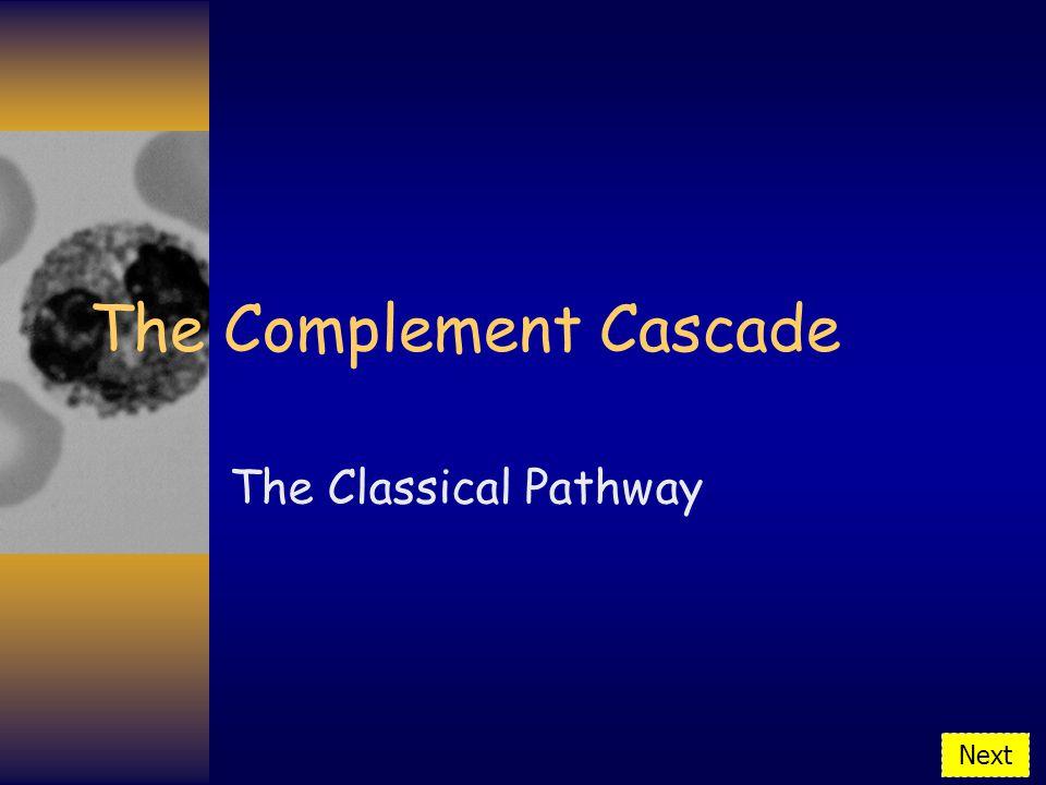 The Complement Cascade