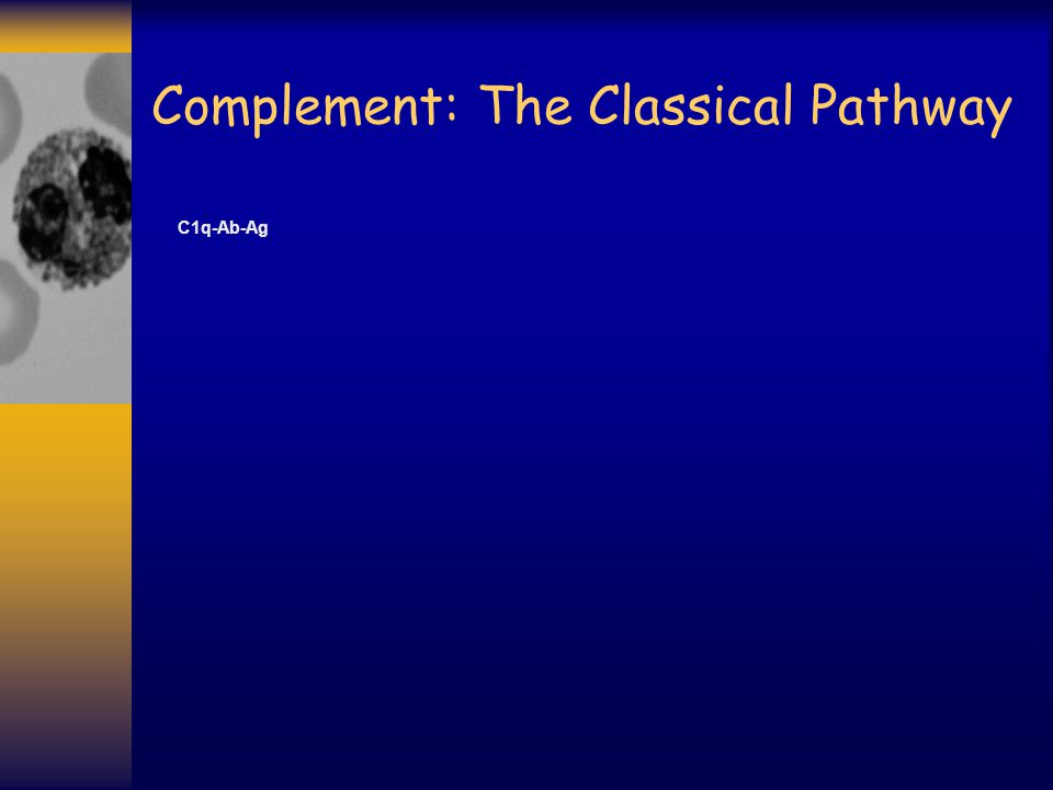 Complement: The Classical Pathway
