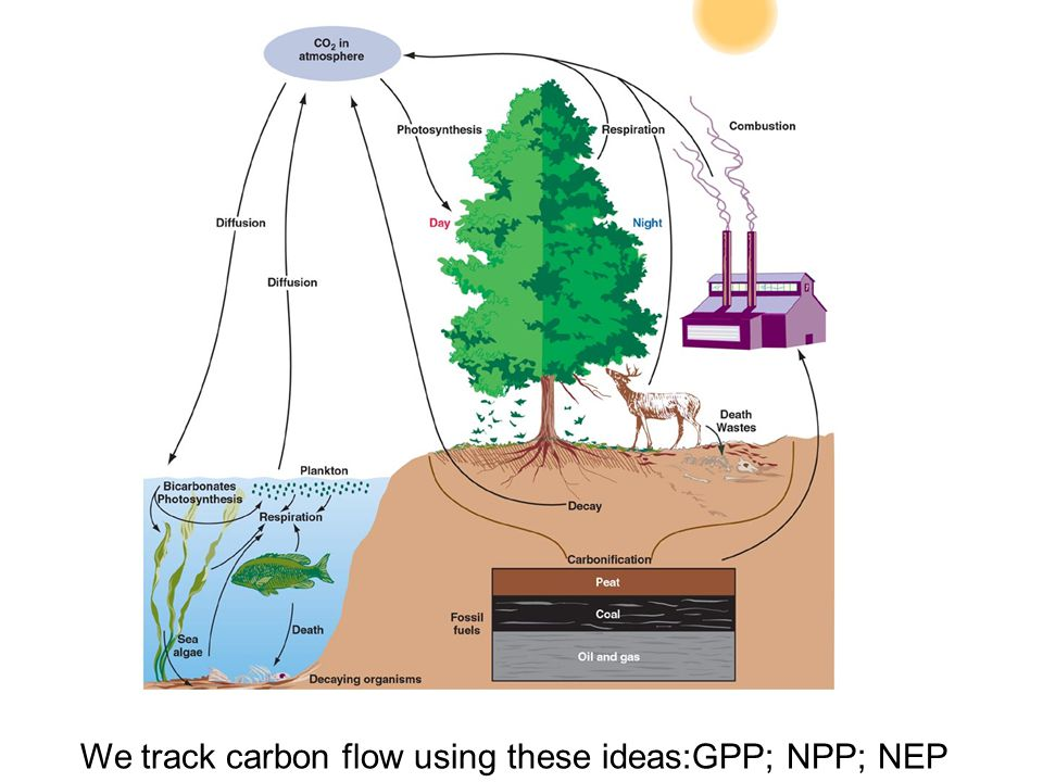 We track carbon flow using these ideas:GPP; NPP; NEP