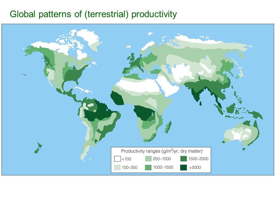 Global patterns of (terrestrial) productivity
