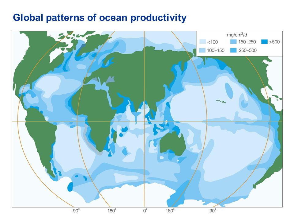 Global patterns of ocean productivity