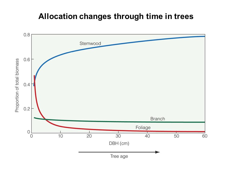Allocation changes through time in trees