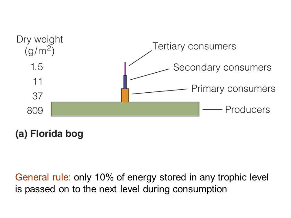 Figure 20.23a General rule: only 10% of energy stored in any trophic level is passed on to the next level during consumption.