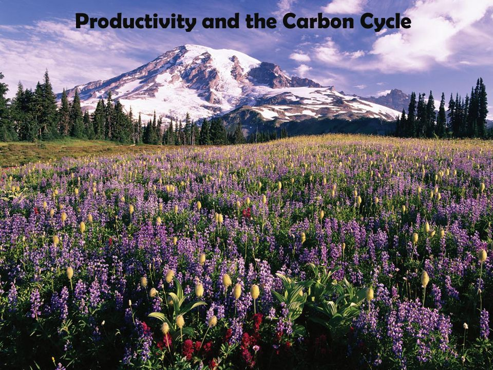 Productivity and the Carbon Cycle