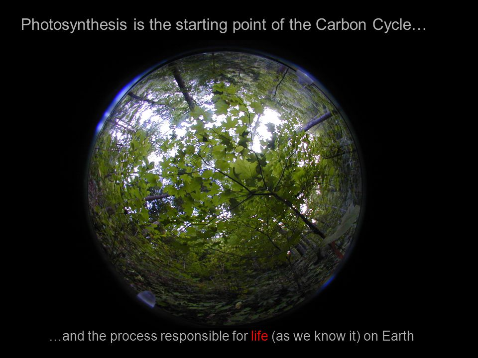 Photosynthesis is the starting point of the Carbon Cycle…