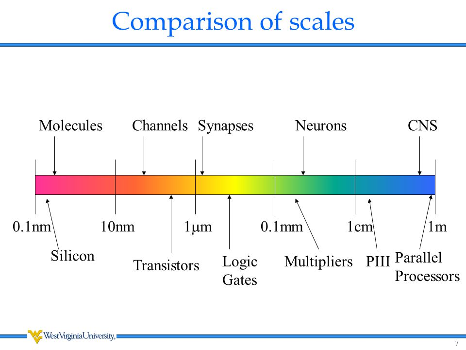 Comparison of scales CNS Neurons Synapses Channels Molecules Silicon