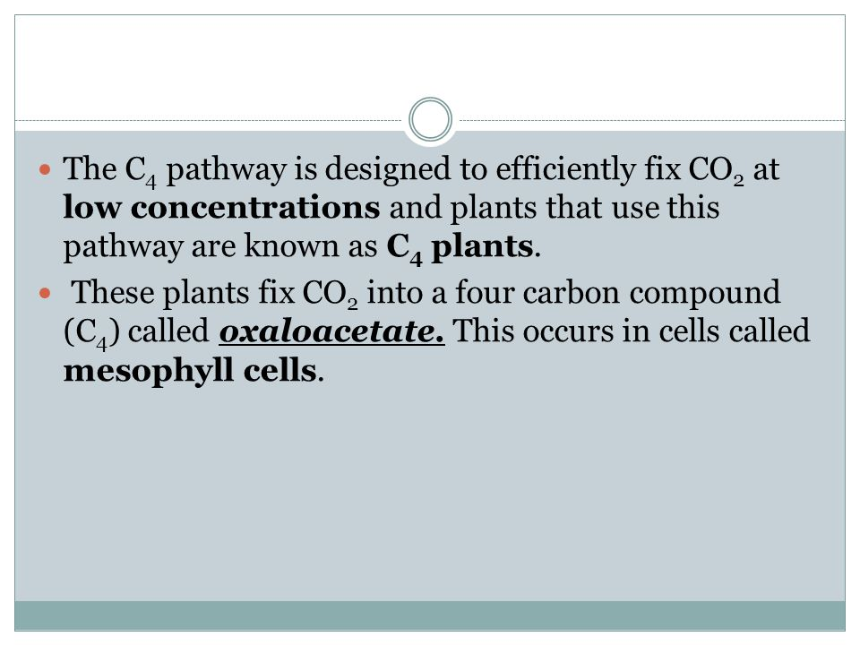 The C4 pathway is designed to efficiently fix CO2 at low concentrations and plants that use this pathway are known as C4 plants.