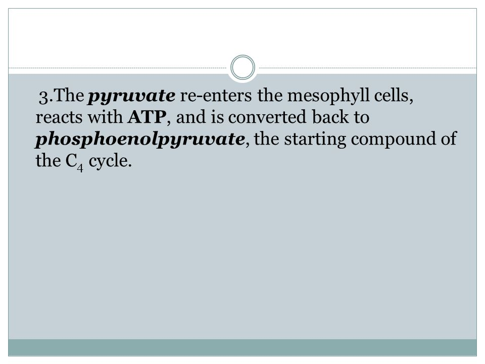 3.The pyruvate re-enters the mesophyll cells, reacts with ATP, and is converted back to phosphoenolpyruvate, the starting compound of the C4 cycle.