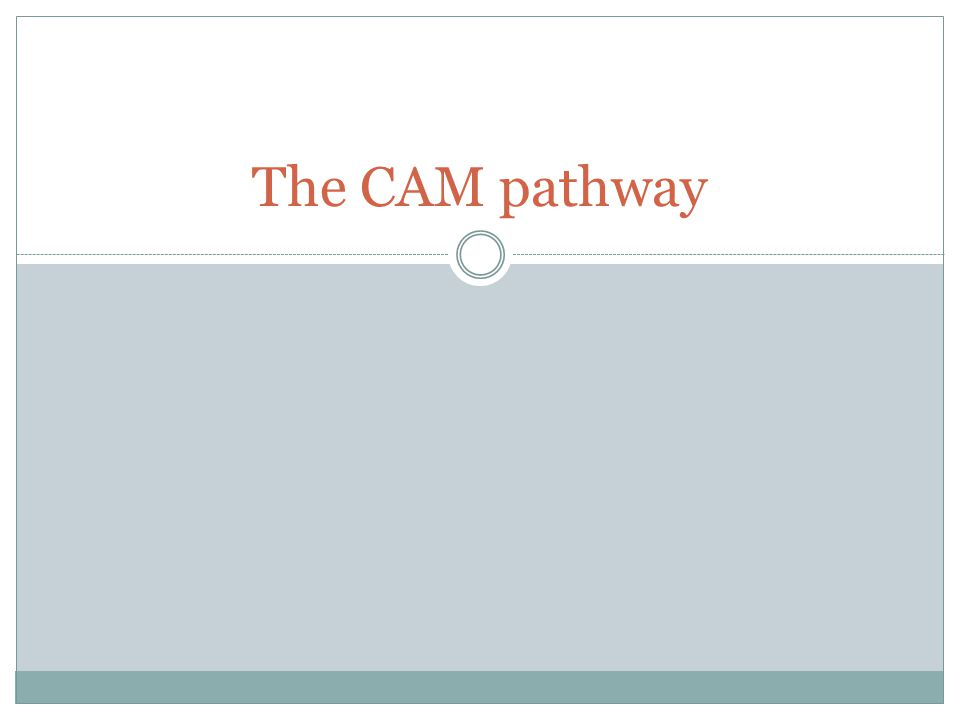 The CAM pathway