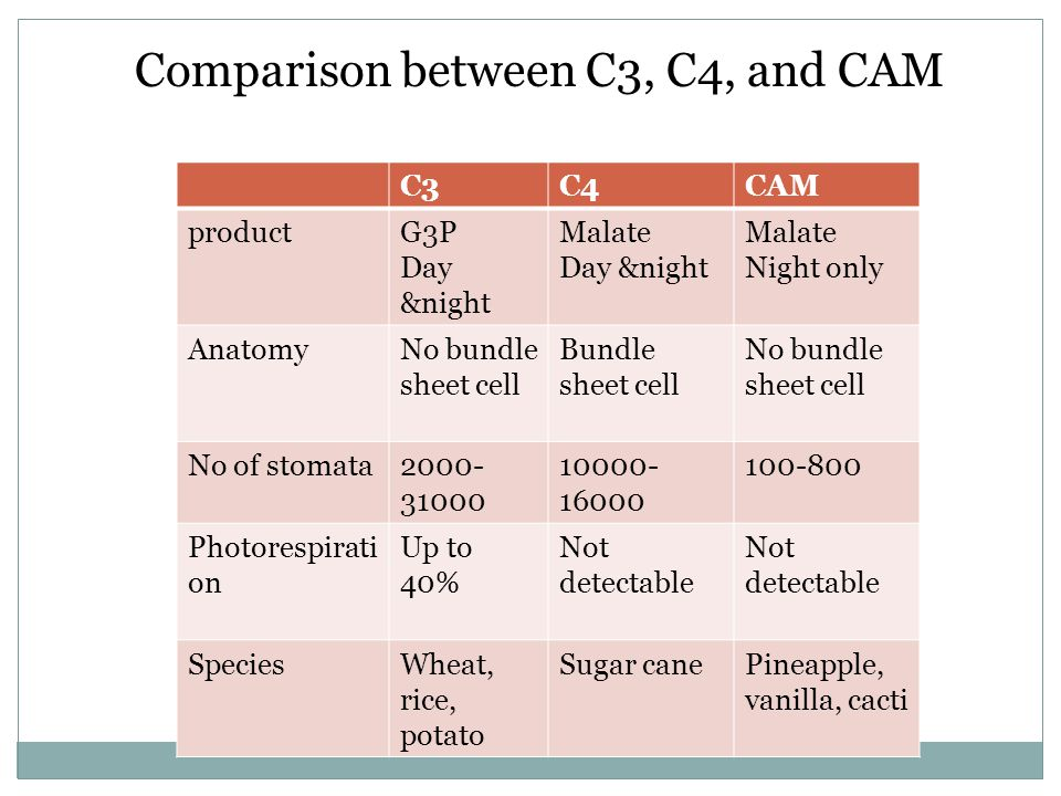 Comparison between C3, C4, and CAM