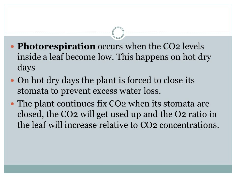 Photorespiration occurs when the CO2 levels inside a leaf become low