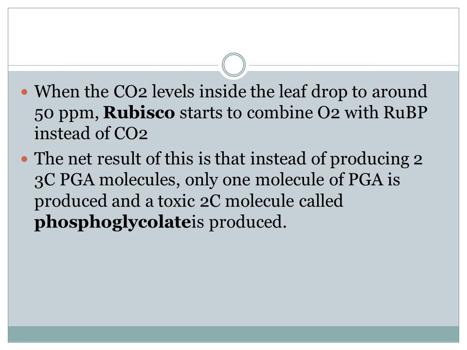 When the CO2 levels inside the leaf drop to around 50 ppm, Rubisco starts to combine O2 with RuBP instead of CO2