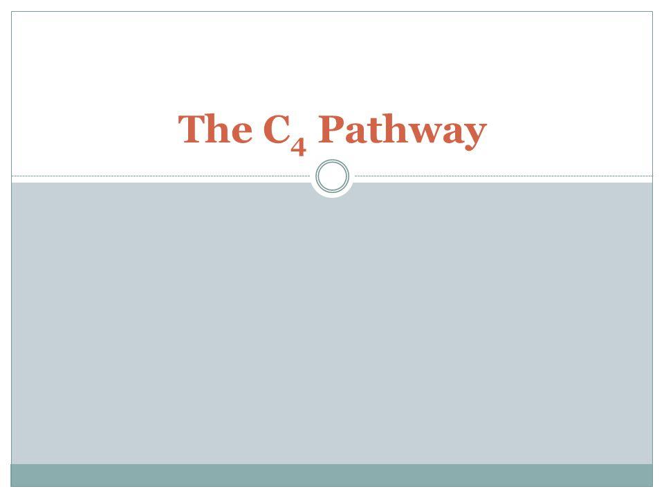 The C4 Pathway