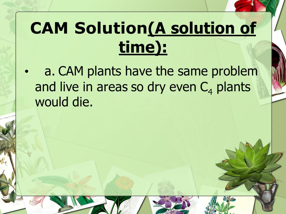 CAM Solution(A solution of time):