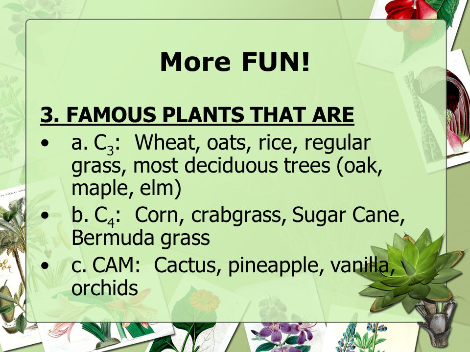 More FUN! 3. FAMOUS PLANTS THAT ARE