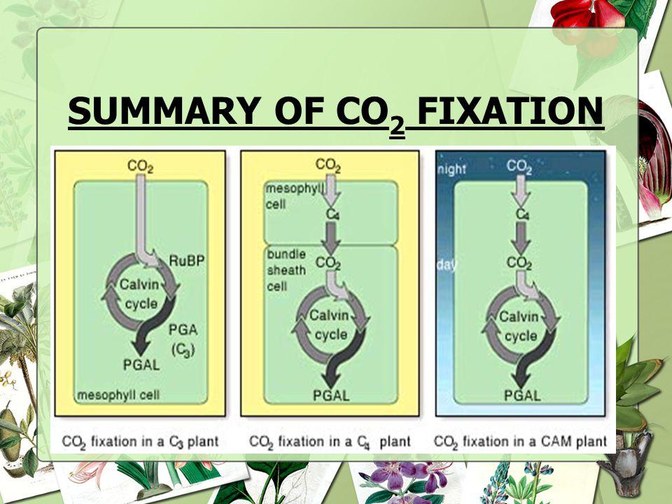 SUMMARY OF CO2 FIXATION