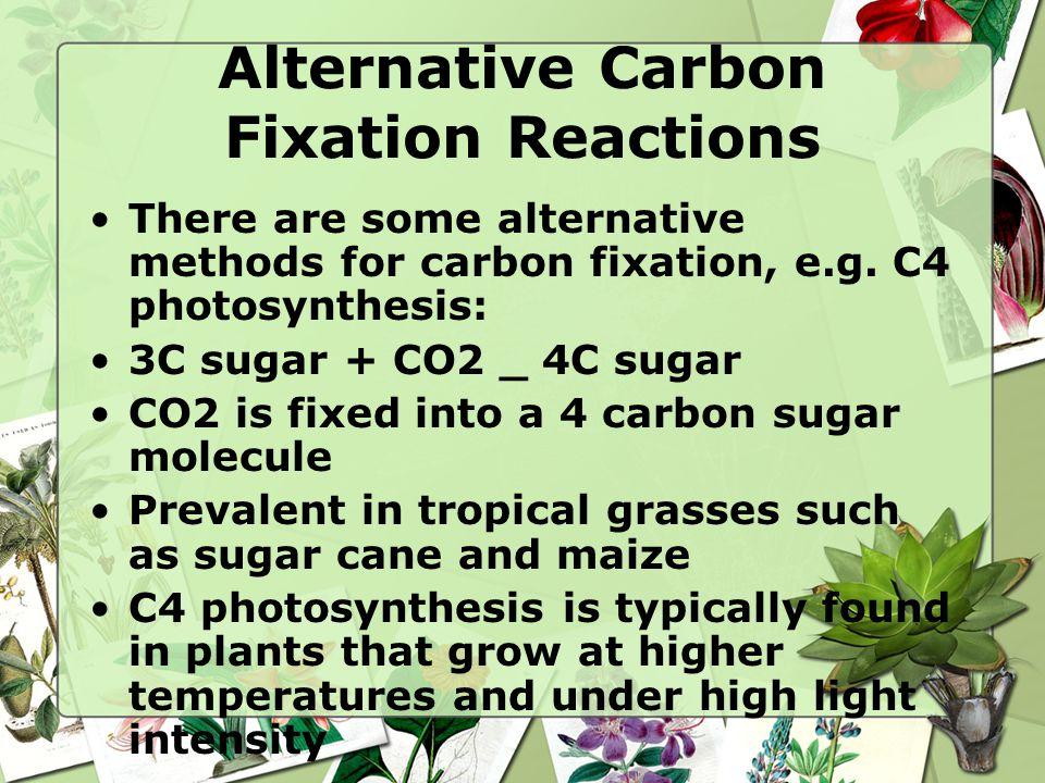 Alternative Carbon Fixation Reactions