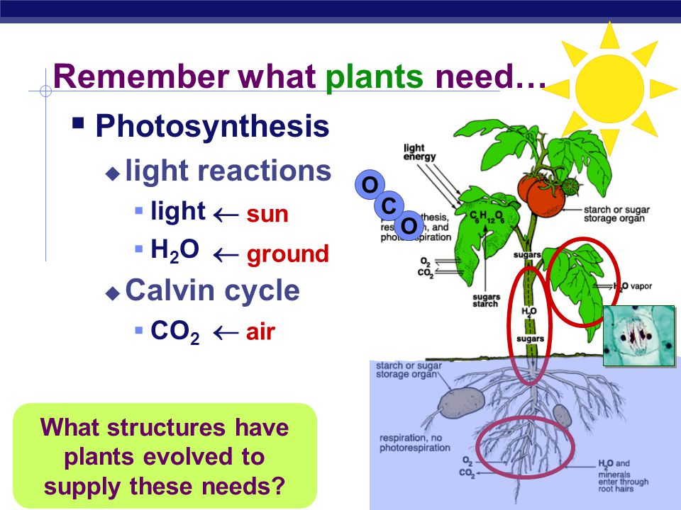 Remember what plants need…