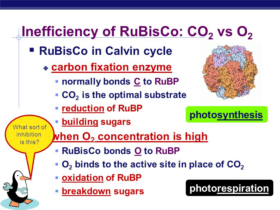 Inefficiency of RuBisCo: CO2 vs O2