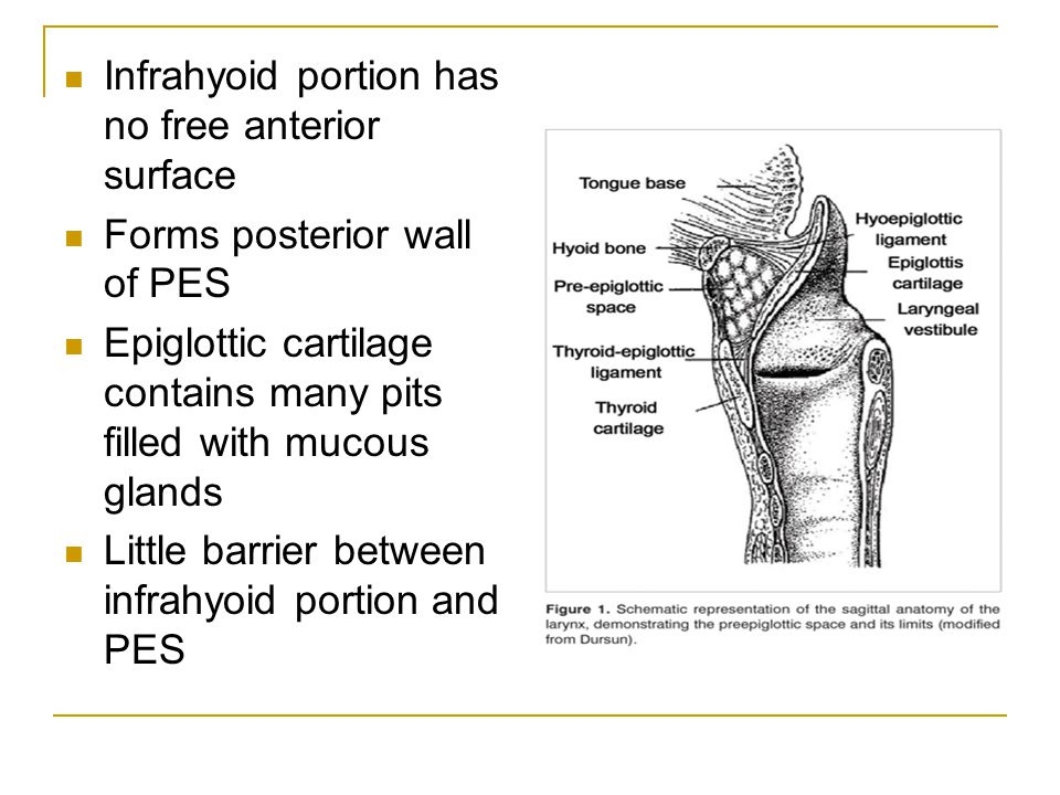 Infrahyoid portion has no free anterior surface