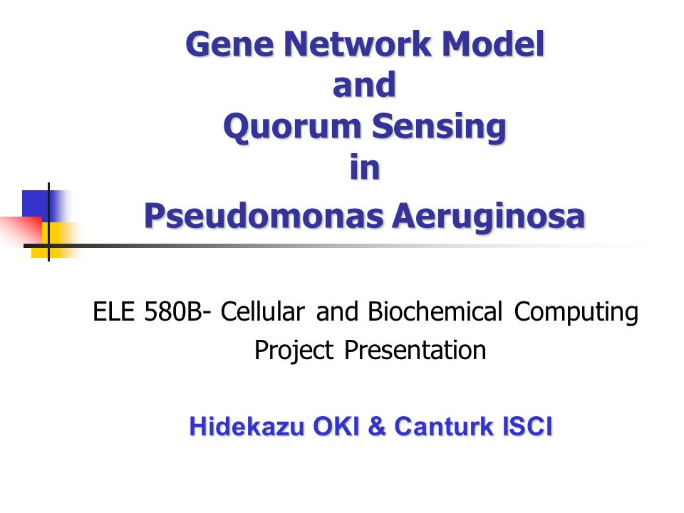 Gene Network Model and Quorum Sensing in Pseudomonas Aeruginosa