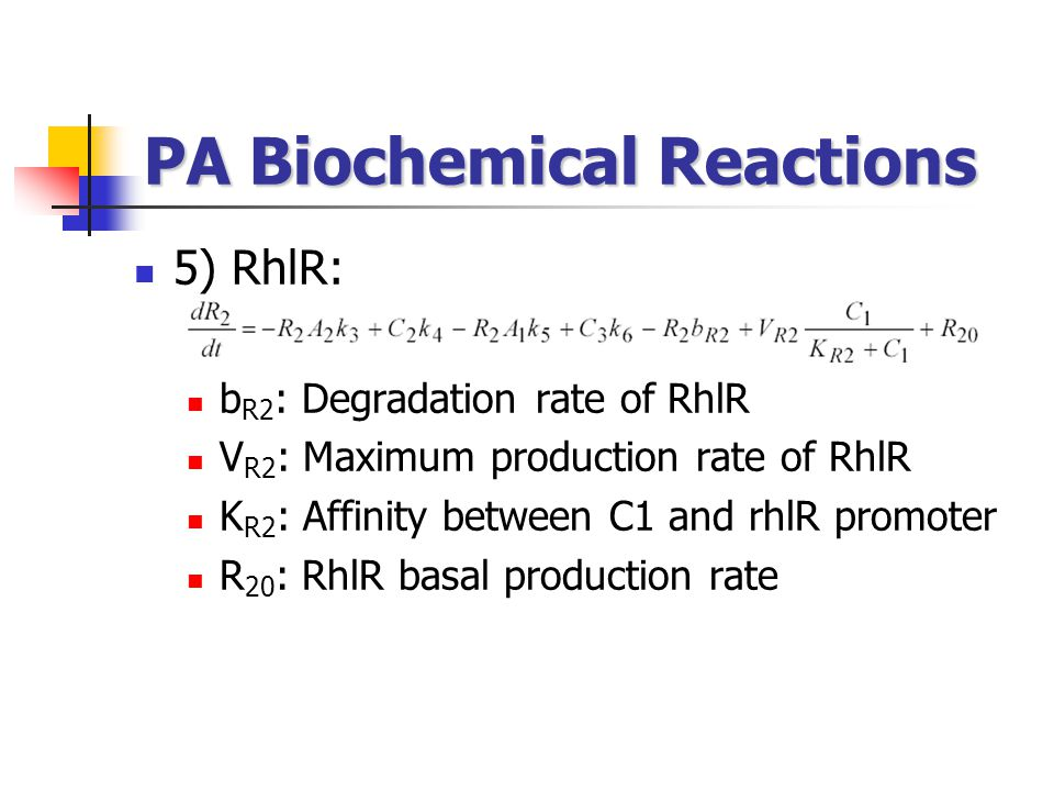 PA Biochemical Reactions
