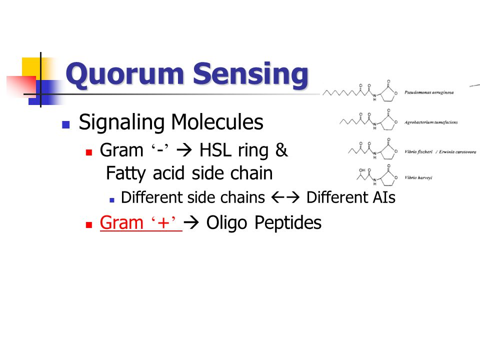 Quorum Sensing Signaling Molecules
