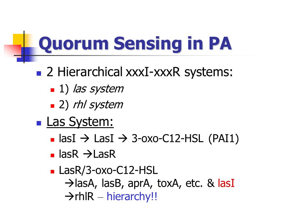 Quorum Sensing in PA 2 Hierarchical xxxI-xxxR systems: Las System: