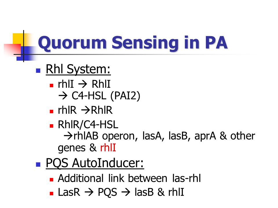 Quorum Sensing in PA Rhl System: PQS AutoInducer: