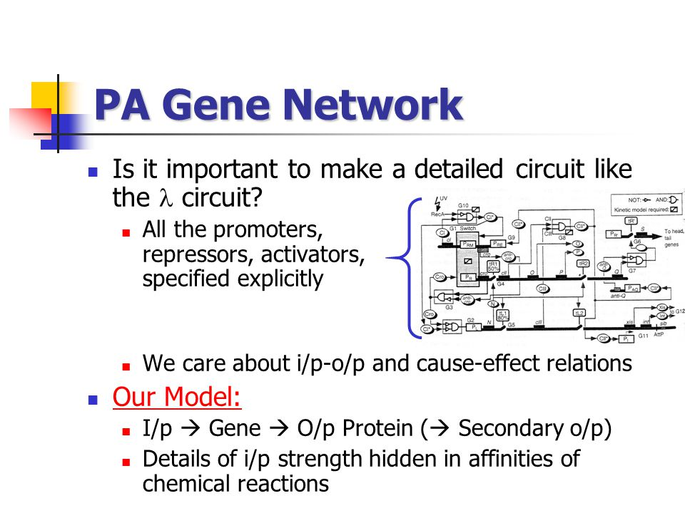 PA Gene Network Is it important to make a detailed circuit like the  circuit All the promoters, repressors, activators, specified explicitly.