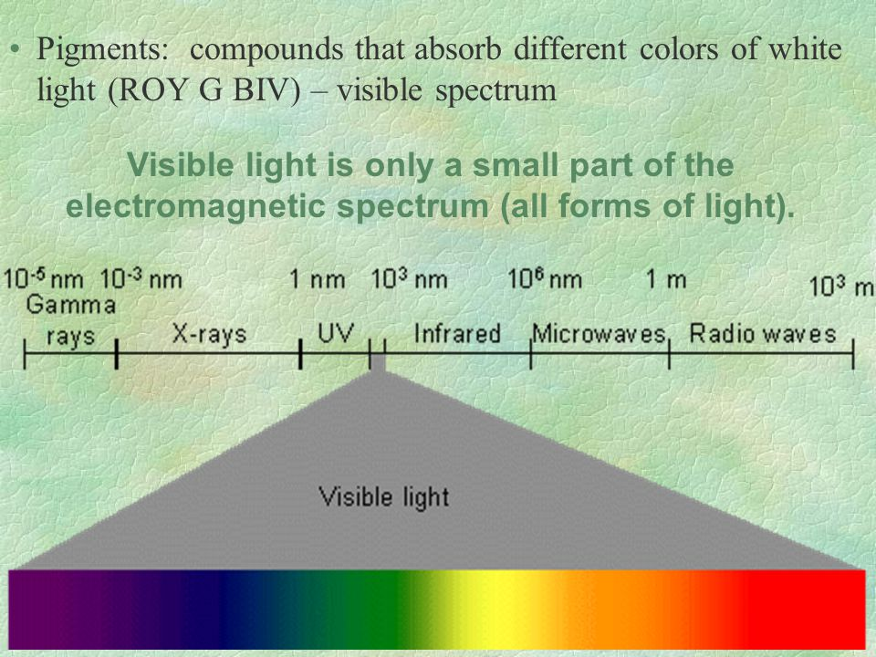 Pigments: compounds that absorb different colors of white light (ROY G BIV) – visible spectrum