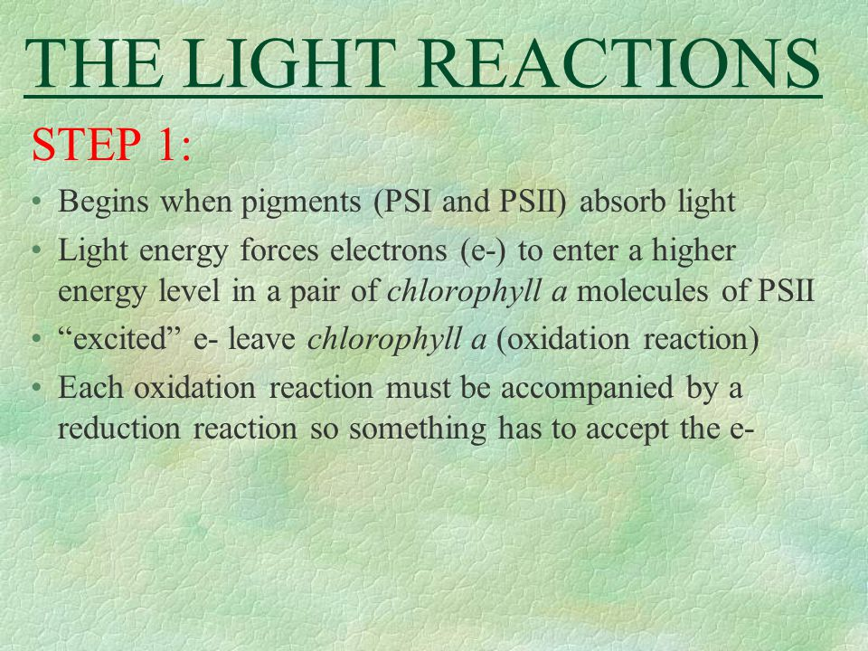 THE LIGHT REACTIONS STEP 1: