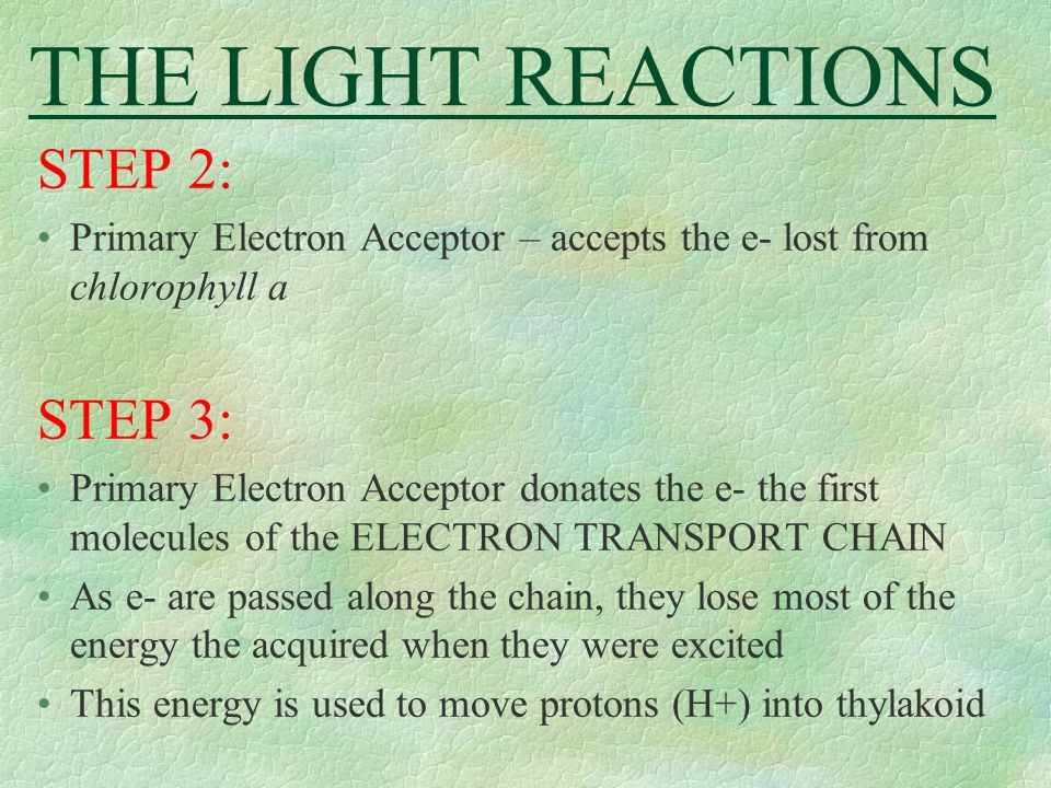 THE LIGHT REACTIONS STEP 2: STEP 3: