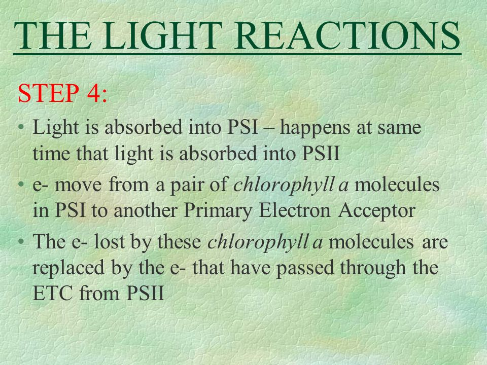 THE LIGHT REACTIONS STEP 4: